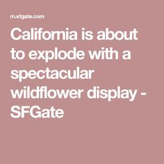 California is about to explode with a spectacular wildflower display - SFGate