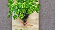 Não são meus, achei na net, créditos na foto Herbs, Nature, Ideas, Pictures, Herb, Medicinal Plants