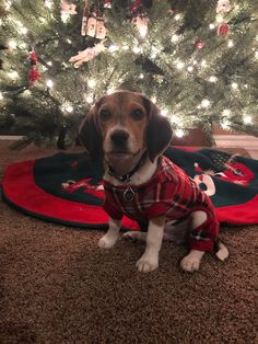 Interesting Beagle Friendly Loyal And Loving Ideas. Glorious Beagle Friendly Loyal And Loving Ideas. Cute Beagles, Cute Puppies, Dogs And Puppies, Pet Dogs, Dog Cat, Doggies, Animals Beautiful, Cute Animals, Merry Christmas Dog