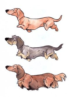 Dachshunds ORIGINAL illustration by DucksAndLemurs on Etsy ~ All three coat varieties!