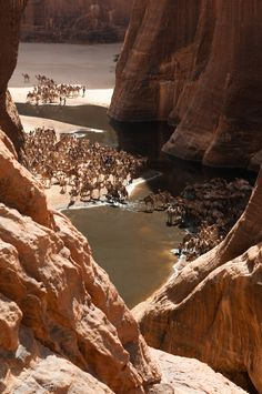 Camels at a watering hole in Ennedi, Chad ~ Photo by...de-desertsky©