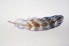Original Watercolor Painting of a Peregrine Falcon Feather by jodyvanB on Etsy