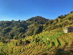 Prosecco Wine Tours | Visit Prosecco Italy Italian Village, Regions Of Italy, Lake Garda, Italian Wine, Prosecco, Wine Country, Wine Tasting, Red Wine, Venice