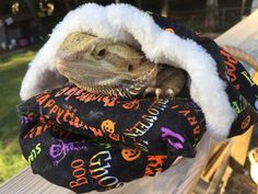 See related links to what you are looking for. Halloween Prints, Halloween Design, Guinea Pig Care, Guinea Pigs, Bed Design, Print Design, Bearded Dragon Vivarium, Dragon Halloween, Exotic Fish