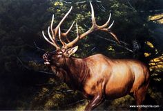 """In this Edward Aldrich print a bull elk bellows out """"A CALL TO THE RIVALS"""" that they are encroaching on his territory, and that any females near-by are already taken. Elk, like all members of the deer"""