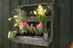 Vintage Regale - Regal, Holzkiste, Wandregal, Garten, Balkon, DIY - ein Designerstück von Timmasiru bei DaWanda
