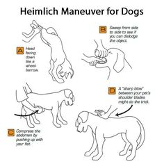 Heimlich-Maneuver-for-Dogs