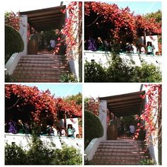 Awesome Autumn wine tasting....... Wine Making, Wine Cellar, Vineyard, Autumn, Photo And Video, Awesome, Instagram, Riddling Rack, Fall Season