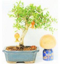 Bonsái Granado (Punica Granatum)