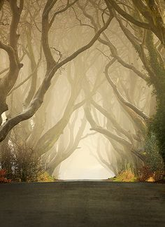 Morning mist at The Dark Hedges in Co. Antrim, Northern Ireland Morning mist at The Dark Hedges in Co. Antrim, Northern Ireland (by Klarens). Oh The Places You'll Go, Places To Travel, Places To Visit, Dark Places, Dream Vacations, Vacation Spots, Vacation Rentals, Dark Hedges, Beautiful World