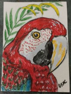 "Original Watercolor ACEO Art Trading Card ""Green Wing Macaw Parrot"" by Kathy Marrs Chandler"