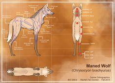 Maned Wolf Testing 1 on emaze