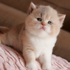 Cute Kittens Having Fun Kittens And Puppies, Cute Cats And Kittens, I Love Cats, Kittens Cutest, Animals And Pets, Baby Animals, Cute Animals, Gatos Cats, Cat Photography