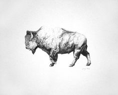 This is my buffalo drawing, in pencil.  By January Waters