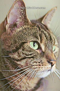 Athena Cat Goddess Wise Kitty: Underpainting Plus Watercolour #CaturdayArt Cruelty Free Shop, Photo Editor Free, Animal Paintings, Art Blog, Cat Art, Free Photos, Animal Pictures, Pet Adoption, Watercolour