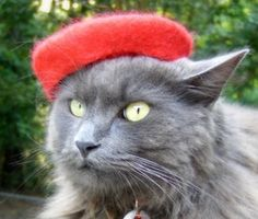 Every crazy cat lady needs one of these for their cats -Mini Beret French Chic Pet Beret Hand Felted by ToScarboroughFair on Etsy! Crazy Cat Lady, Crazy Cats, Felt Cat, Cat Hat, French Chic, Gifts For Pet Lovers, Wet Felting, Beret, Cool Cats