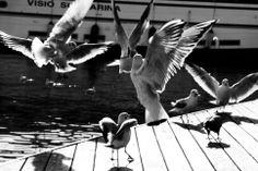palomas en el puerto
