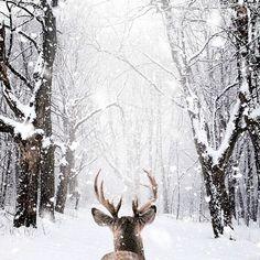 Canada paysage fond ecran neige fond d écran d hiver
