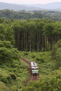 A local #train runs in the woods  #Hokkaido
