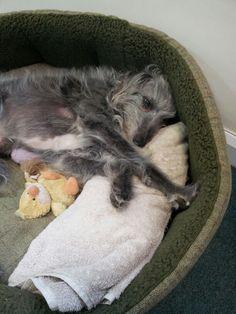 Tough day for Dylan the Talk Twenty 1 dog