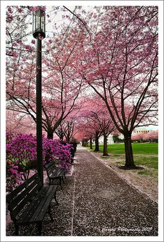 Purple and Pink :: Spring