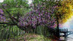 PCペイントで絵を描きました! Art picture by Seizi.N:   毎日の愛犬ティアモとの散歩が楽しみです、また今年も会えたねと満開の桜の舞い散る散歩道を歩きながら今日も感謝です。 そんな公園の桜の絵をお絵描きしてみました。  Missa Johnouchi (城之内 ミサ) - Butterfly http://youtu.be/g3NRXrzb3nU