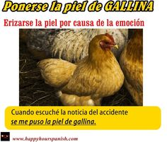 Ponerse la piel de GALLINA : do an entire unit on refranes from animals / play charades / ??