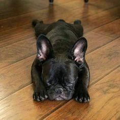 French Bulldog, Monday Mood