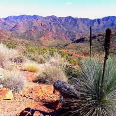Arkaroola Wilderness Sanctuary, Flinders Ranges, South Australia. The colour of the range changes throughout the day and really is this colour in late afternoon.