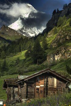 Дома, построенные посреди лесной чащи