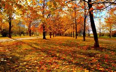 autumn leaves pic - Full HD Wallpapers, Photos - autumn leaves category