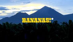 "BANANAS!* trailer by WG Film. Juan ""Accidentes"" Dominguez is on his biggest case ever. On behalf of twelve Nicaraguan banana workers he is tackling Dole Food in a ground-breaking legal battle for their use of a banned pesticide that was known by the company to cause sterility. Can he beat the giant, or will the corporation get away with it?"