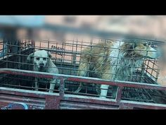Chinese Dog-Leather Industry Exposed  GRAPHIC!  Don't buy leather products unless they are made in the US!