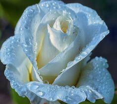 36 mejores imágenes de Rocio delicada como el rocio. | Gotas de ...