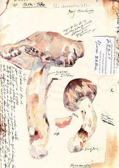 南方熊楠「マツタケ」Tricholoma matsutake (S.Ito et Imai) Sing. drawing by Minakata Kumagusu Botanical Illustration, Botanical Art, Illustration Art, Sketch Journal, Art Journal Pages, Sketchbook Inspiration, Art Sketchbook, Dora, Ecole Art