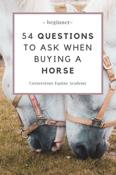 Questions to Ask When Buying a Horse - Cornerstone Equine Academy Buy A Horse, Horse Love, Horse Feed, Dressage, Questions To Ask, This Or That Questions, Horse Care Tips, Types Of Horses, Equestrian Outfits
