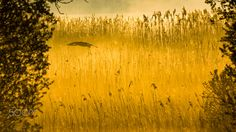 Crane's Landing - Crane landing near the lake shore. Listome near Myślibórz. West Pomeranian district Poland