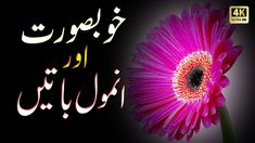 Presenting By Urdu Shayari: Khubsurat or Anmool Batein Short Moral Stories, Moral Stories For Kids, New Love Songs, Urdu Quotes, Neon Signs, Make It Yourself, Youtube, Youtubers, Youtube Movies