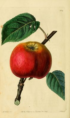 The Cole Apple - Biodiversity Heritage Library