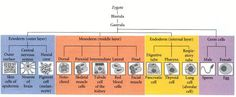 Figure 1.1. Some representative differentiated cell types of the vertebrate body.