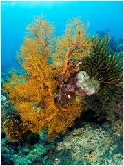 Bali Scuba Diving, North Bali Diving, home of Reef Seen Turtle Hatchery, Reef Seen Dancers & the Reef Gardeners of Pemuteran Bali Scuba Diving Bali, Turtle Hatchery, Oceans, North West, Beaches, Creatures, Sands, The Beach
