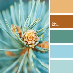 Color Palette  #3693