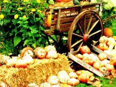 Gartenäffchen: Farben, Fülle und die Zeit - der Oktober ist die Vorspeise