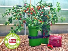 Use a Holiday-Proof planter to keep plants watered up to 2 weeks at a time so there's no more coming home from your holidays to parched peppers, thirsty tomatoes or wilting watercress! Automatic Watering System, Self Watering Planter, Going On Holiday, Garden Gifts, Water Plants, Christmas 2016, Irrigation, Harvest, Cool Things To Buy