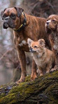 Trzy psy na drzewie