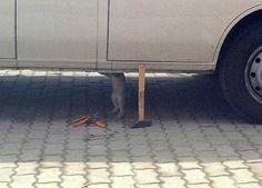 A cat repairing a car.