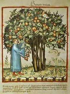14. Jahrhundert, Hausbuch d. Cerruti/Süße Granatäpfel/