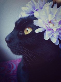 black cat ❤❤♥For More You Can Follow On Insta @love_ushi OR Pinterest @ANAM SIDDIQUI ♥❤❤