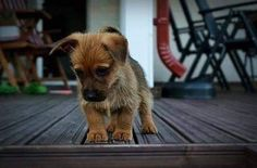 Beautiful and cute dogs picture collection. Let's known about beautiful dogs, top 10 cutest dog breed, prettiest dog breeds, super cute doggies, cutest dog in the world