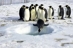 ice fishing the penguin way